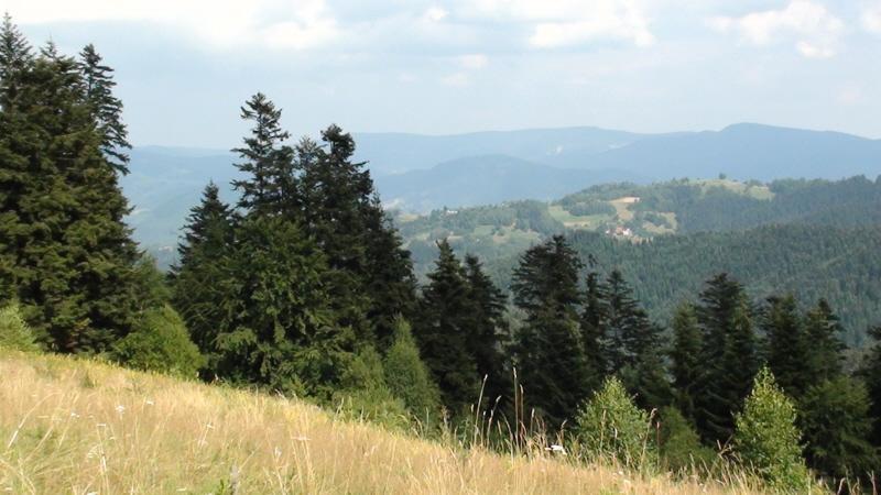 Eliaszówka. Z Kosarzysk przez Obidzę