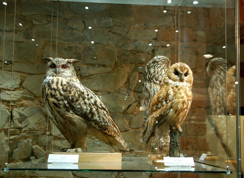Opawa. Śląskie Muzeum Ziemskie