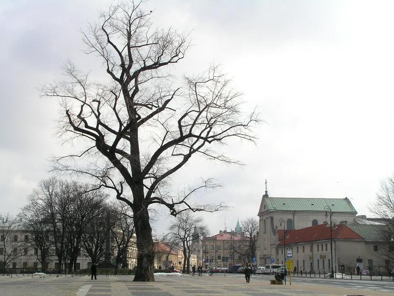 Lublin. Czy żyje jeszcze lubelski Baobab?