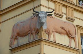 Świdnica Legendy o aptece Pod Bykami