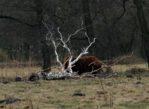 Czarnocin. Szczęśliwe krowy i koniki polskie