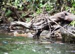 Kanion Sumidero. Rejs wśród krokodyli