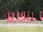 Celestún. Ptasi rezerwat biosfery