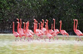 Celestún Ptasi rezerwat biosfery