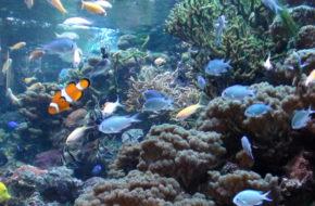 Gdynia Morskie kolekcje w Akwarium