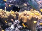 Gdynia. Morskie kolekcje w Akwarium