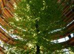 Rugia. Spacer nad wierzchołkami drzew
