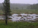 Lemenjoki. Przez tajgę i tundrę nad Ciepłą Rzeką