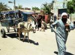 Baharija. Oaza na Pustyni Libijskiej