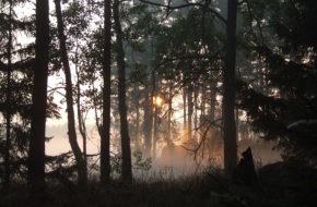 Bory Tucholskie Rykowisko kończy się o świcie