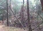 Wierzchlas. Rezerwat Cisów – święty gaj