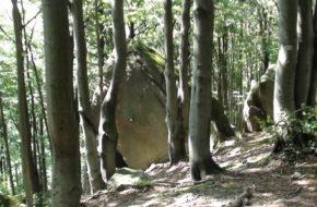 Kornuty Rozczarowanie w skalnym rezerwacie