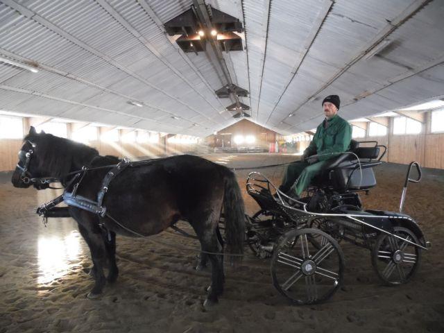 Regietów. Największa stadnina koni huculskich