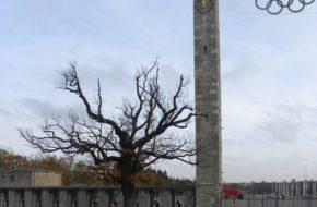 Berlin Stare drzewo na olimpijskim stadionie