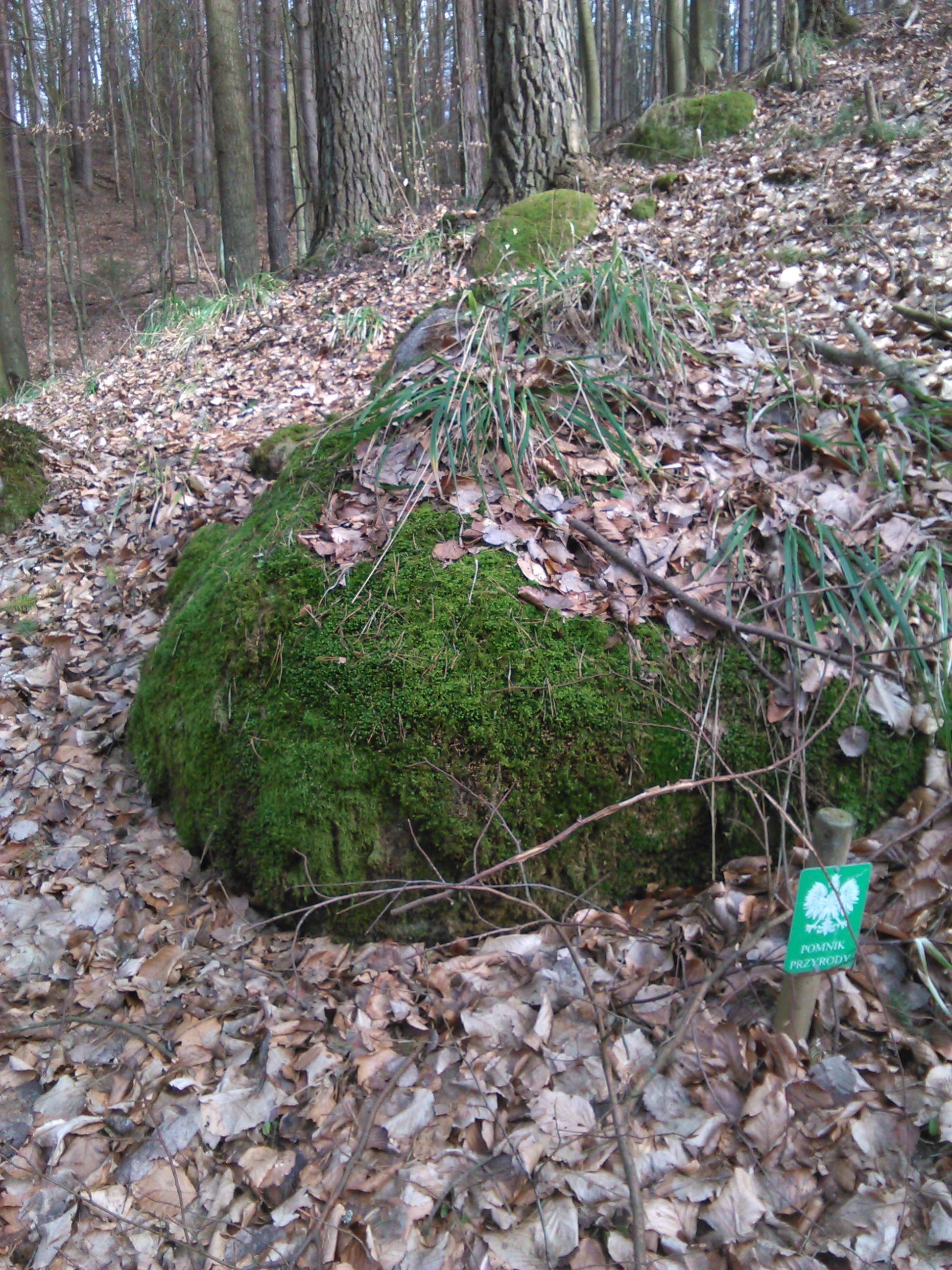 Gdynia. Miejskie pomniki przyrody nieożywionej