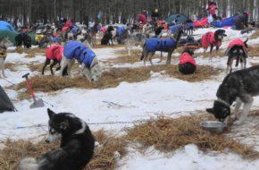 Horní Lánov Na zimowym psim biwaku