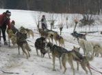 Horní Lánov. Na zimowym psim biwaku