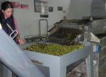 Tochni. Agroturystyka po cypryjsku