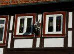 Wernigerode. Uroda pruskiego muru