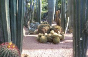 Marrakesz Ogród Majorelle, najpiekniejszy w mieście