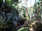 Marrakesz. Niezwykły ogród Majorelle