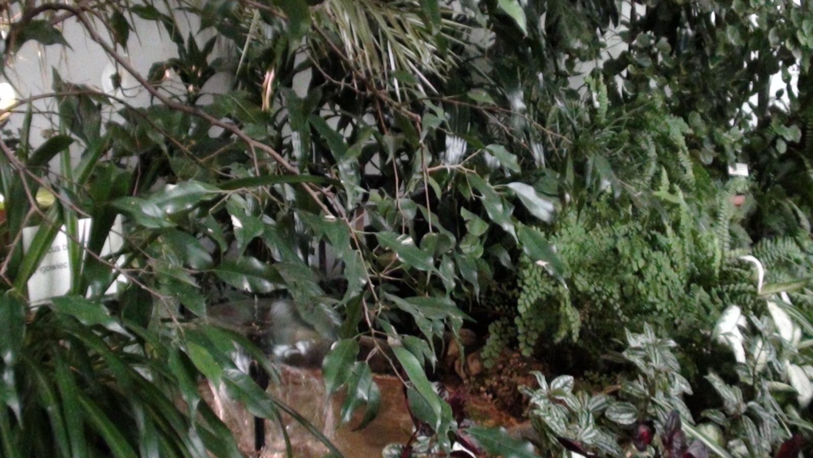 Łańcut. Storczykarnia, czyli w świecie kwiatów