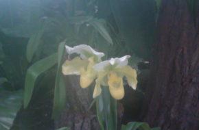 Łańcut Storczykarnia, czyli w świecie kwiatów
