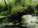 Piaseczno. Spływ Jeziorką, czyli dzikość za miastem
