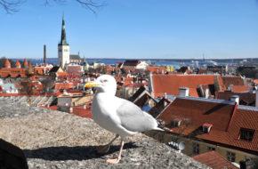 Tallinn Wokół zamku, czyli górne stare miasto