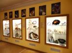 Święta Katarzyna. Muzeum minerałów i krzemienia w paski