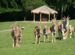 Dvůr Králové. Afrykańskie lato w zoo safari