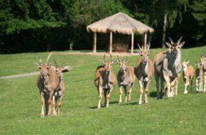 Dvůr Králové Afrykańskie lato w zoo safari