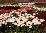 Kijów. Ogród botaniczny akademii nauk