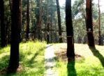 Bykownia. Miejsce pamięci w podkijowskim lesie