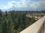 Bachledowa Dolina. Nowy szlak w koronach drzew