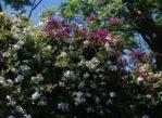 Palermo. Sycylijska roślinność rodzima i z importu