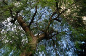 Palermo Sycylijska roślinność rodzima i z importu