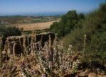 Sycylia. Roślinny krajobraz od morza po góry