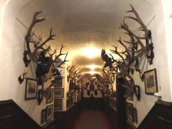 Konopištĕ. Pałac arcyksięcia, mordercy zwierząt