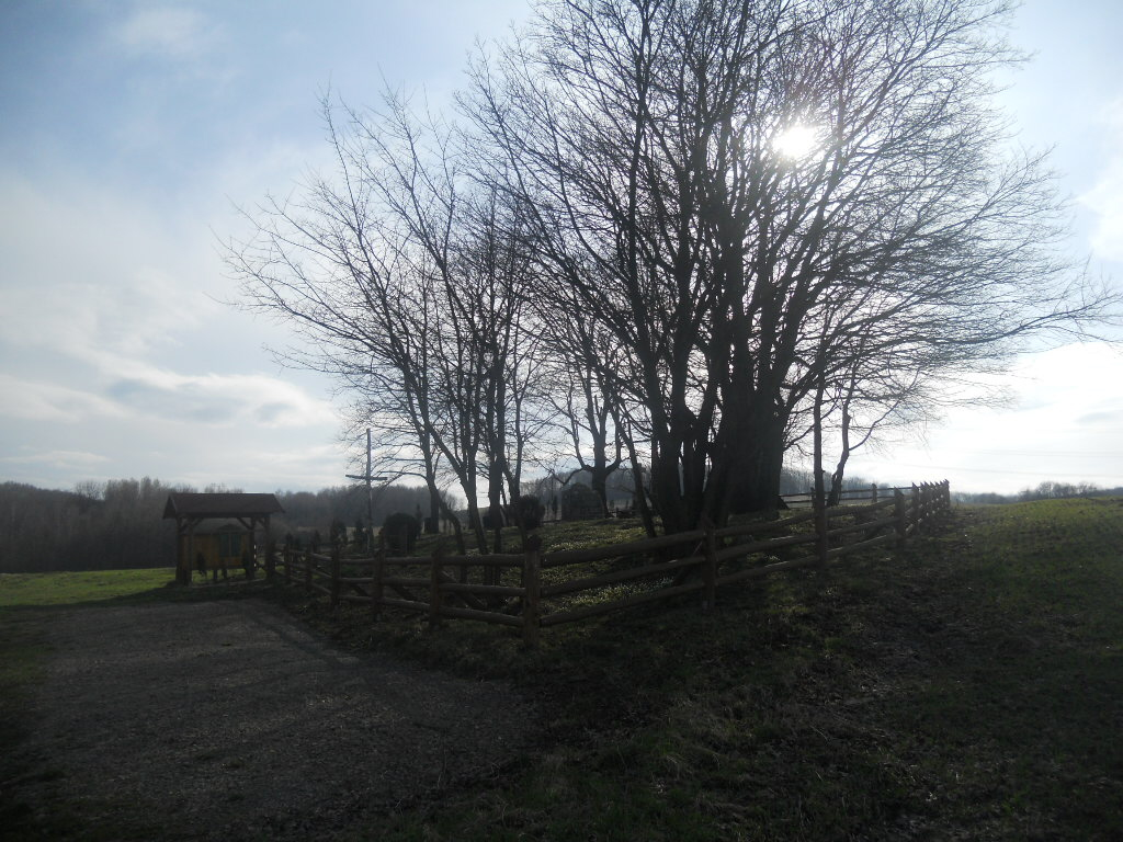 Iwonicz. Cmentarz choleryczny na skraju wsi