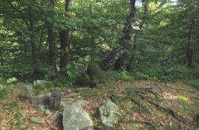 Beskid Dukielski Piotruś ma skały na szczycie