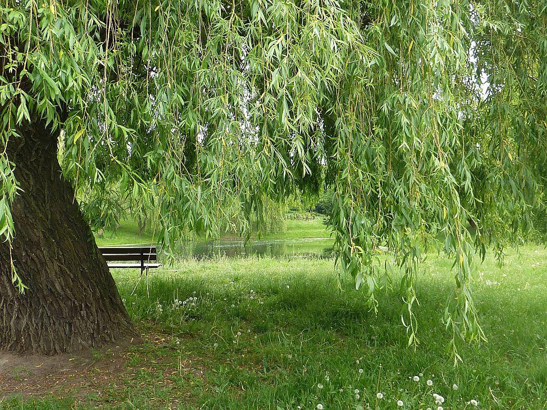Kalisz. Park Przyjaźni w miejscu cegielni
