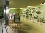 Międzyzdroje. Woliński Park Narodowy i jego muzeum