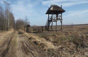 Grobla Honczarowska Po nasypie do Batalionowej Łąki