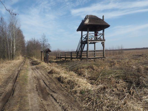 Grobla Honczarowska. Po nasypie do Batalionowej Łąki