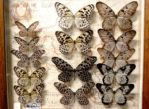 Bochnia. Muzeum Motyli Arthropoda