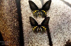 Bochnia Muzeum Motyli Arthropoda