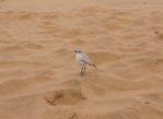 Namib. Na tej pustyni nie sposób się nudzić