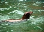 Sarbsk. Fokarium i park morski