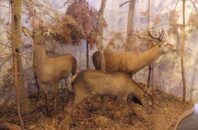 Gołuchów Dybul, a w nim wystawa o ochronie lasu